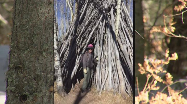 Huge Wooden Structures Mystify Forest Officials In New Mexico