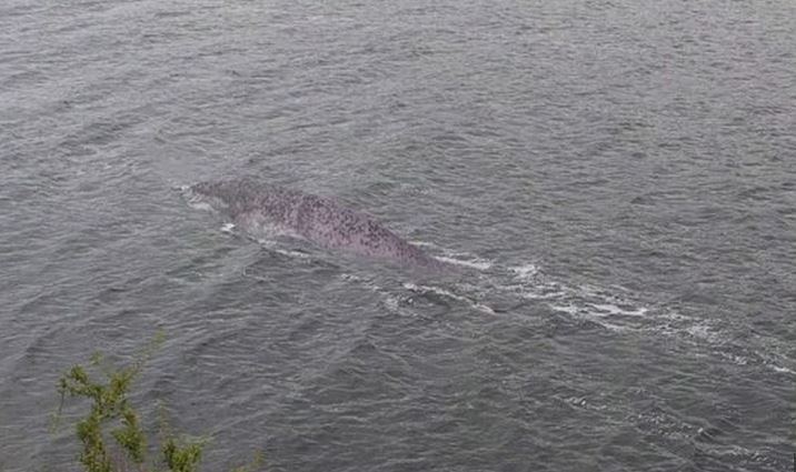 A Resident Of The UK Claims To Have Photographed The Loch Ness Monster