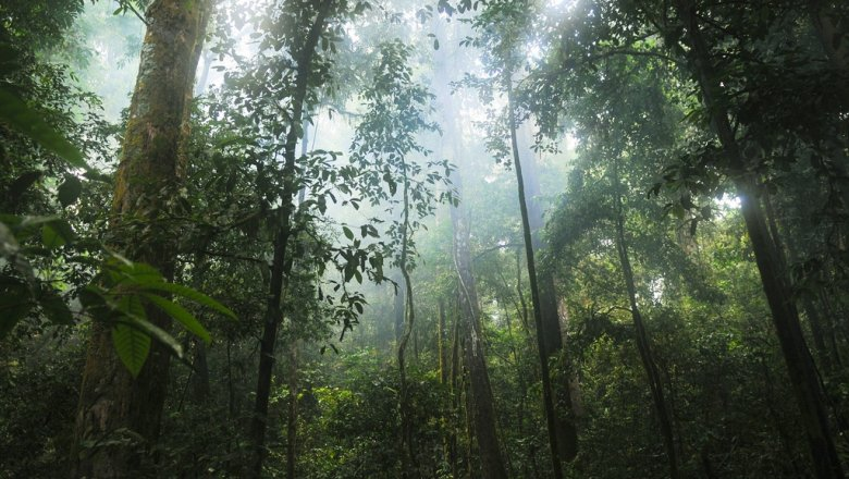 Scientists have figured out which forests absorb carbon dioxide better