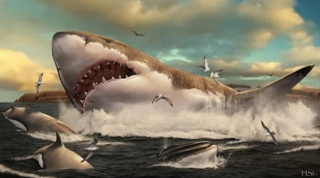 Why did megalodons die out?
