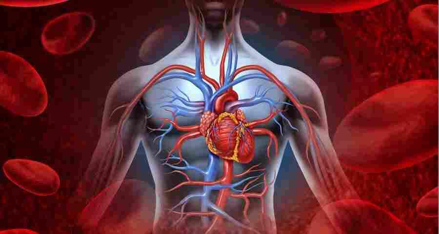 Plaučių Pleurito Simptomai Ir Gydymas  Myoma