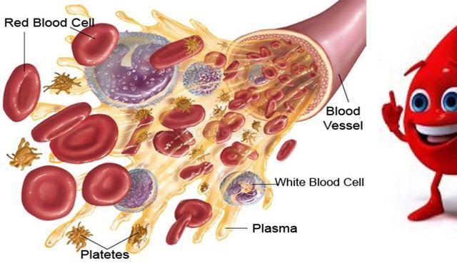 Pagerinkite kraują ir jo sudėtį liaudiškomis priemonėmis