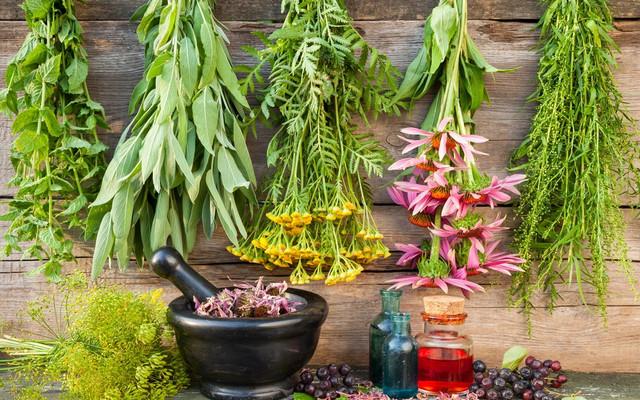 Vaistiniai augalai gegužės mėnesį