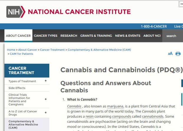kanapės, vėžys, vėžines ląsteles, vyriausybė, naikina vėžines ląstele