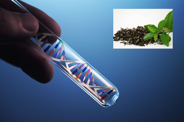 Keiskite savo genetinį kodą žaliąja arbata!