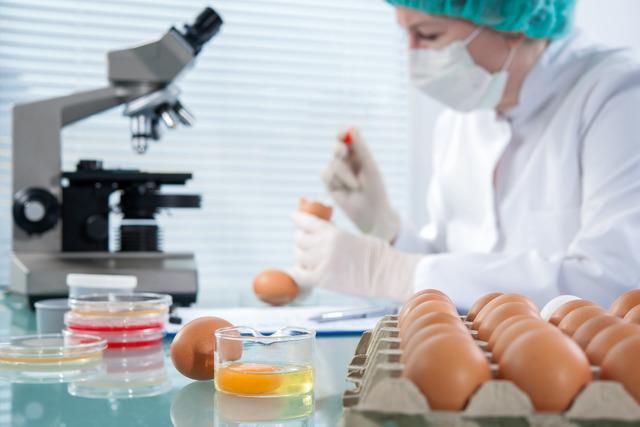 Anglai siūlo genetiškai modifikuoti vištas, kad jų kiaušiniai taptų vaistais