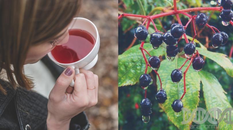 Vaisinė juodųjų serbentų ir šeivamedžio uogų arbata LOYD, 40 g